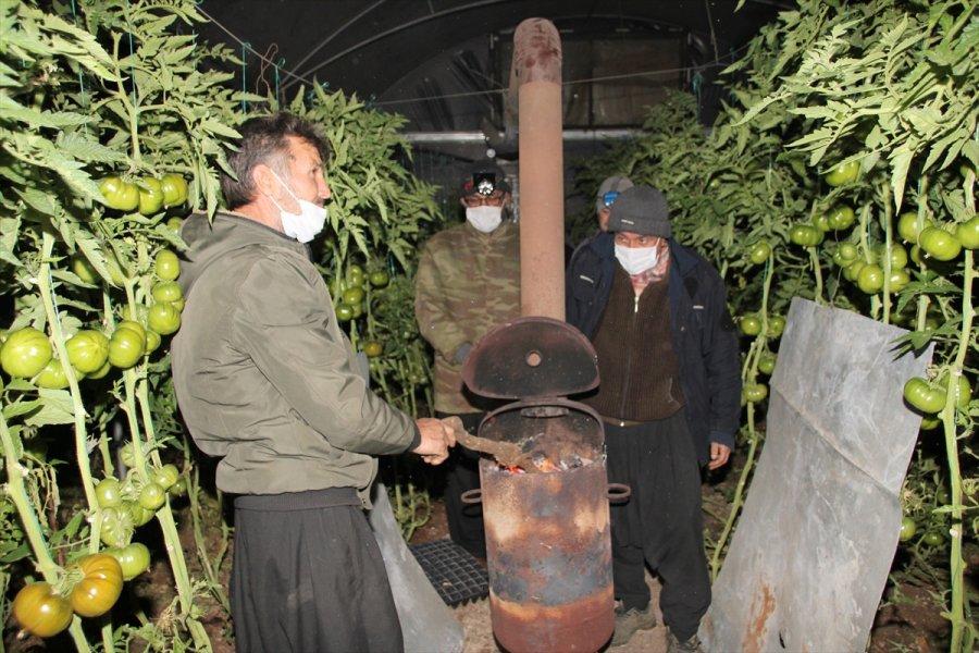 Mersin'de Domates Üreticileri Seralarında