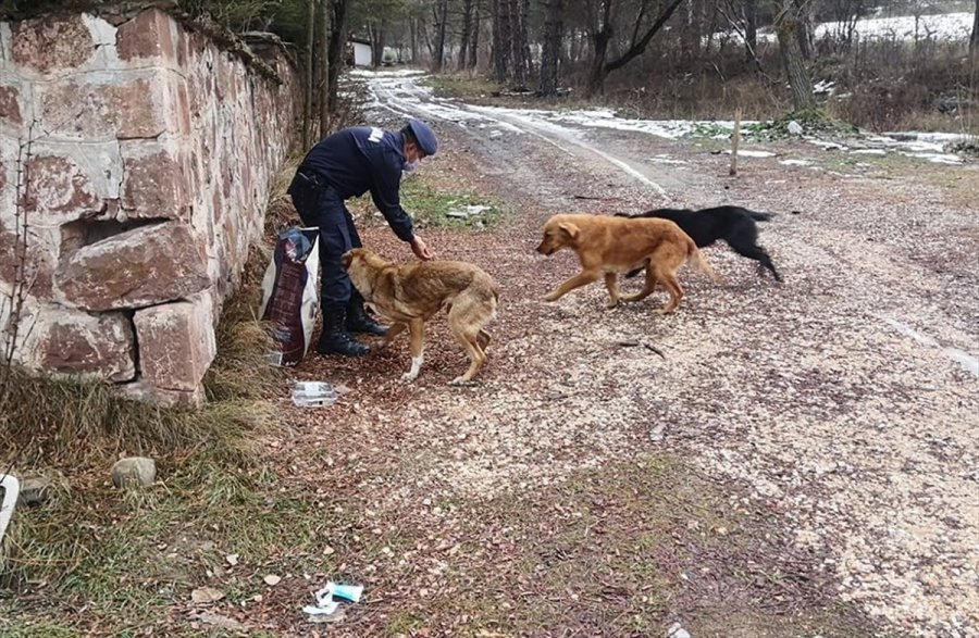Nallıhan'da Jandarma Ekiplerinden Sokak Hayvanlarına Yem
