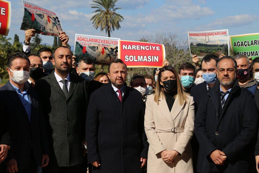 Antalya'da Narenciye Ağaçlarının Kesilmesine Tepki Gösterildi