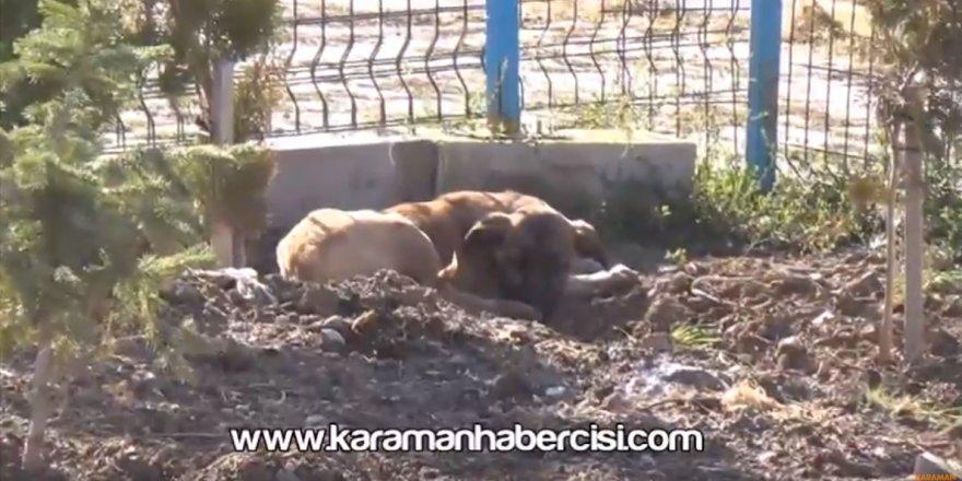 Yavru Köpekler Yeni Yaşamlarına Başlıyor